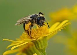 Ce faci cand esti intepat de viespe? 7 remedii utile facute acasa